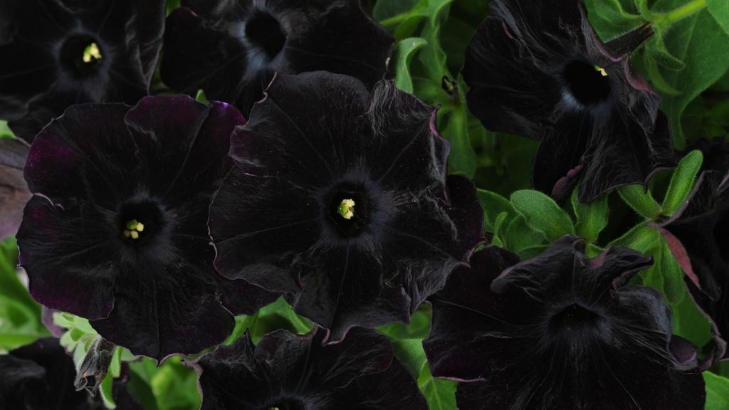 Flores(122)