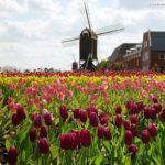 Holanda(1)
