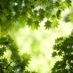 Natureza Dimensões 1360x1020(235)