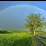 Natureza Dimensões 1360x768(35)